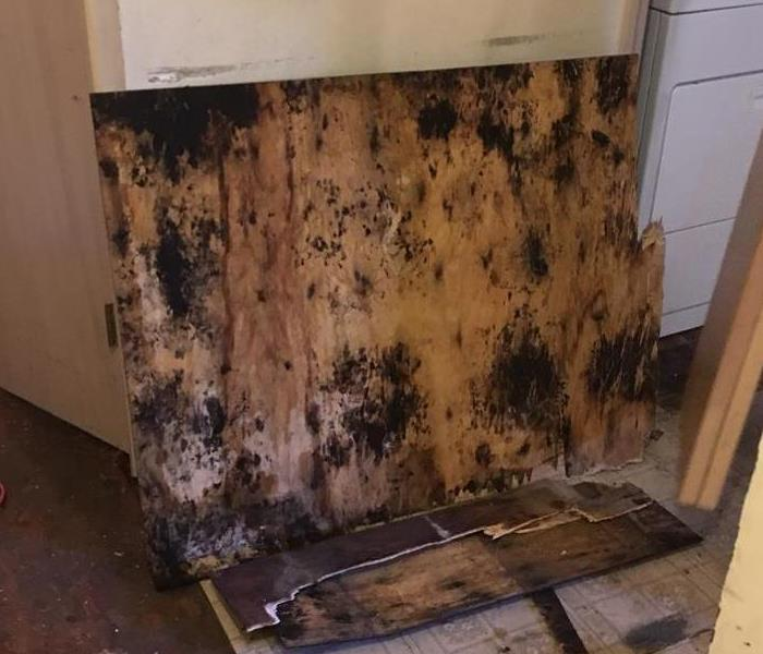 Why SERVPRO Allegan & Barry County Residents:  Follow These Mold Safety Tips If You Suspect Mold